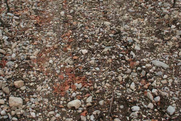 il suolo delle vigne di Bressan