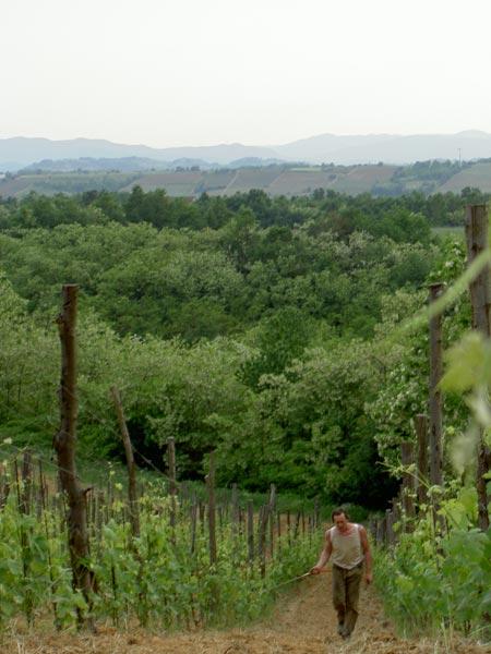 trattamento del vigneto biodinamico a cascina degli ulivi