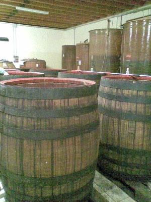vinificazione nella cantina de i botri