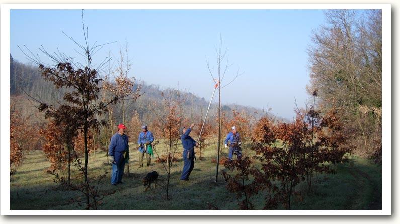 Il lavoro nei boschi alla Fattoria Majnoni Guicciardini