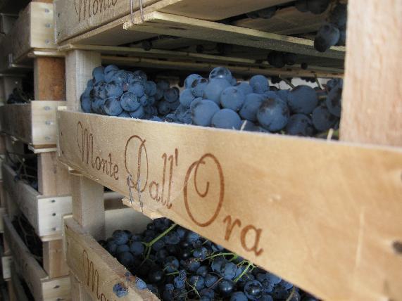 L'appassimento delle uve a Monte dall'Ora - Amarone Valpolicella