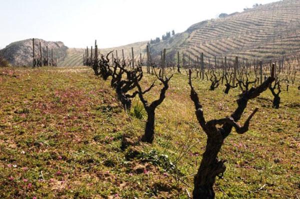 I vigneti di Porta del Vento - vino biologico sicilia