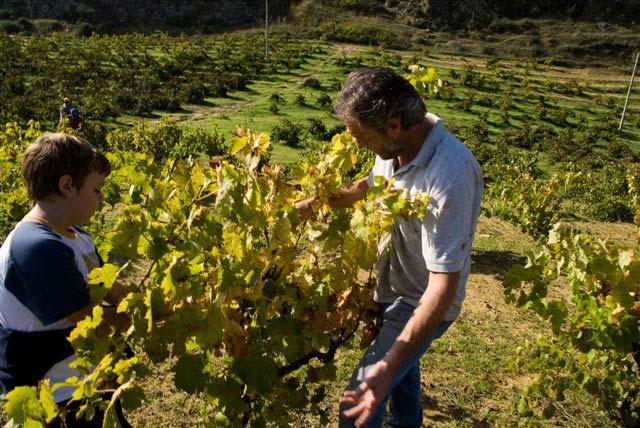 le vigne e di porta del vento