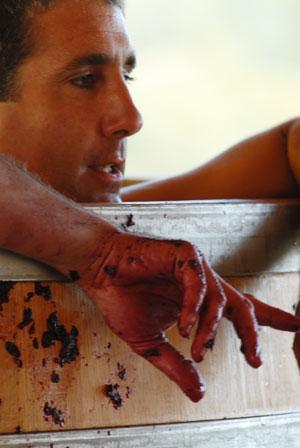 saverio petrilli durante la vendemmia a tenuta di valgiano
