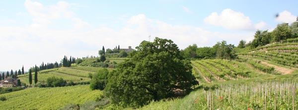 le vigne di villa bellini a Castelrotto