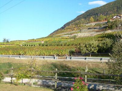 paesaggio vitivinicolo della valle d'aosta