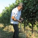 agricola-del-farneto-lavori-vigna