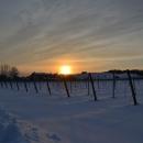 agricola-del-farneto-vigna-neve
