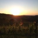 vigna-tramonto