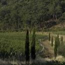 Panorama a Caiarossa, produttore di vini in biodinamica in Toscana