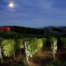 Vigneti di Caiarossa, vini in biodinamica - Toscana