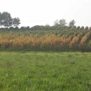cordani-marco-vigneto-autunno
