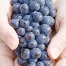 raccolta-uva-vino