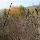 vigna-gabbiano-2016-pre-potatura2