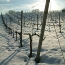 Vigna in inverno a Fontorfio