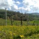 La primavera a Fontorfio