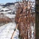 marcadisanmichele-inverno