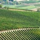 Vista delle vigne