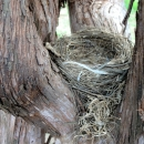 nido-nella-vigna-di-montedigrazia