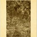 sanfereolo-vigna-vecchia