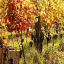 valliunite-vigna-autunno