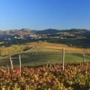 valliunite-vigne-paesaggio