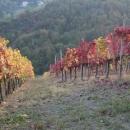 vercesidelcastellazzo-vigna-autunno2