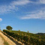 Valli Unite: trent'anni di vino, contadinità, cultura e economia alternativa