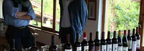 Il Dolcetto nelle terre del Piemonte un vino e un vitigno da riscoprire