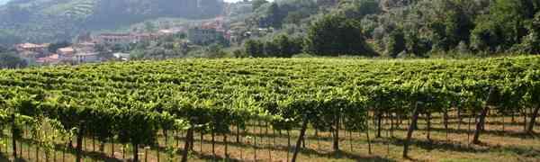Fattoria di Bacchereto, dove il Carmignano incontra l'agricoltura biodinamica