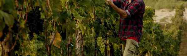 Fiorano, dalle Marche il vino biologico e pieno di gioia!