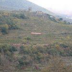 Viticultura eroica: Pelizzatti Perego tradizione di Valtellina