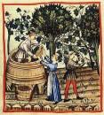 Stampa vendemmia antica Chianti