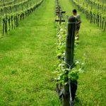 Crocizia, un'altra viticoltura di montagna