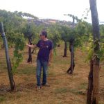 Le vecchie vigne nei vini di Cantina Giardino