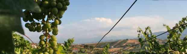 Emidio Pepe, la forza della tradizione nei vini dell'Abruzzo