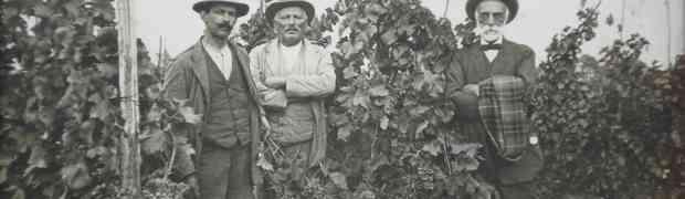 Il vino ai tempi dell'Avv. Ageno, viaggio nella vitivinicoltura di inizio secolo