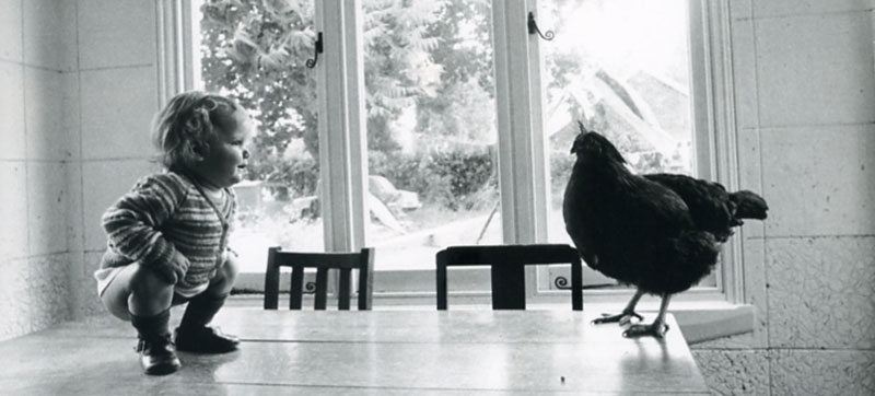 bimbo con gallina
