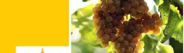 Il 19 e 20 gennaio a Bari Parlano i vignaioli… e i loro vini