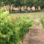 La Maliosa, biodiversità e tradizione nella Maremma Toscana