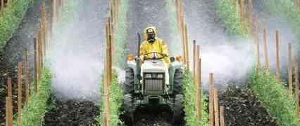 Viticoltore condannato per contaminazione con pesticidi