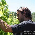 Sorelle Palazzi, il vino della Toscana minore