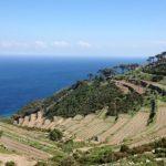 I vigneti sull'isola di Capraia