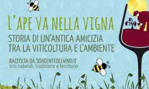 L'ape va nella vigna, la viticoltura che rispetta la vita